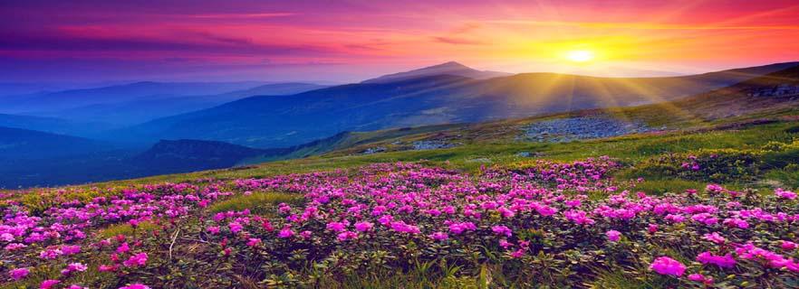 hemkund-sahib-trek-with-valley-of-flowers.jpg