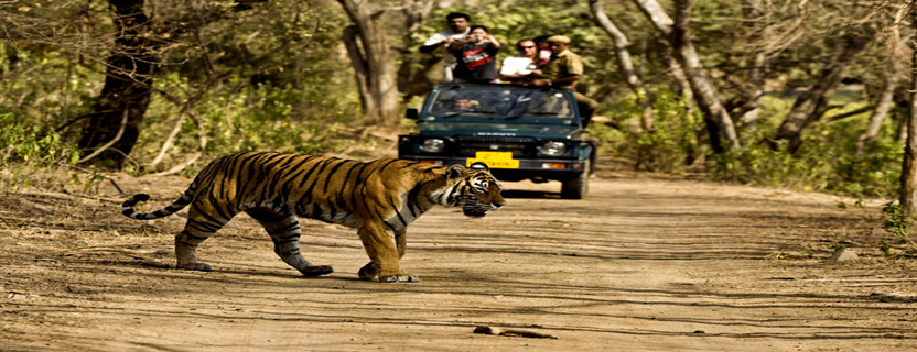 jim_corbett_national_park.jpg