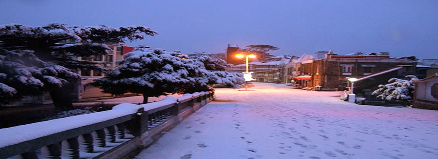 Tour And Travel Agencies In Shimla