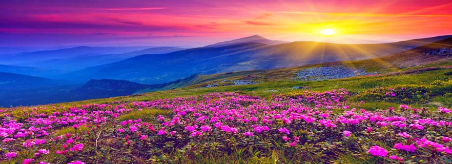 valley-of-flowers.jpg