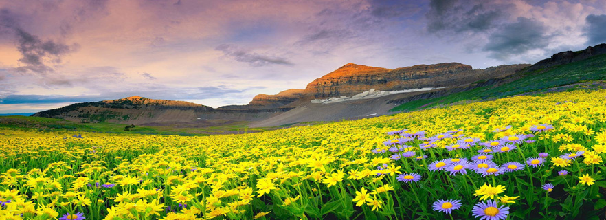 valley_of_flowers_attractions.jpg