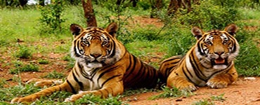 Uttarakhand Tour Package (Code:AS-65)