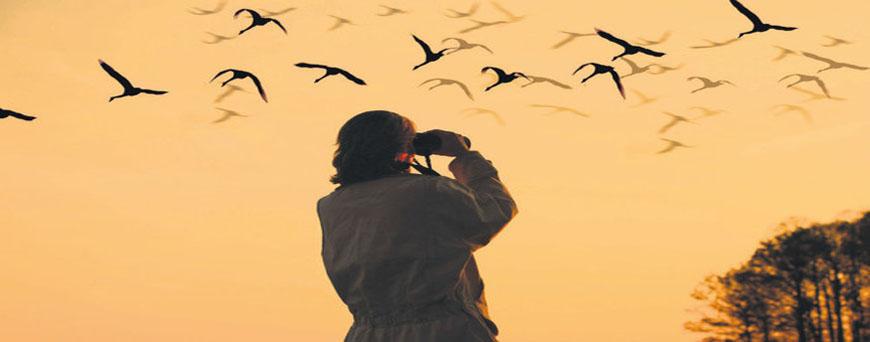 Enjoy Bird Watching