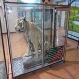Dhangari Museum