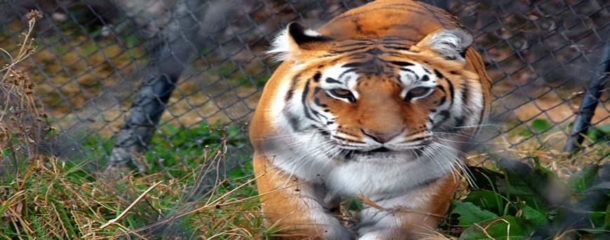 Naintal Zoo