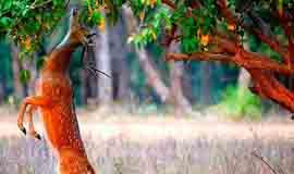Chamoli Nature