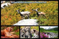 Govind Wildlife Sanctuary