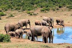 Chilla Wildlife Sanctuary